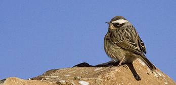 navn på fugler